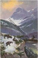 Gämse - Signiert Alf. Schönian München - Verlag T.S.N. Serie 1749 - Illustrateurs & Photographes