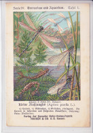 KAKAO-FABRIK - HAUSEN & CO.A.G KASSEL - SERIE 4 - TERRARIUM&AQUUARIUM-NUM 1 - Publicités