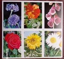 4 PLANCHES DE 6 IMAGES CARTONNÉES 8,5X12cm LES FLEURS EDITIONS LES PLAISIRS ET LES JEUX VERS 1980/90 - Livres, BD, Revues