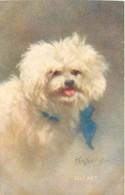 254019-Zula Kenyon, 1907 No 5557, Pet, Bichon Frise? - Cani