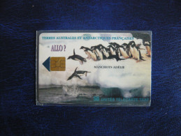 ALLO MANCHOTS - TAAF - French Southern And Antarctic Lands