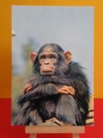 Faune Africaine >Animaux & Faune > Le Singe - Non Circulé, Un Clic Sur La Photo - Affen