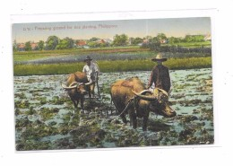8979 - PHILIPPINES Preparing Ground For Rice Planting - Filippine
