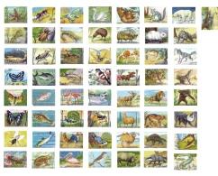 ANIMALES DE TODO EL MUNDO - Lote De 57 Cromos Sueltos, Todos Diferentes  -  Editorial Fher. 1967 - Sin Pegar - - Otros