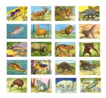 ANIMALES DE TODO EL MUNDO - Lote De 20 Cromos Sueltos, Todos Diferentes  -  Editorial Fher. 1967 - Sin Pegar - - Otros
