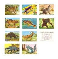 ANIMALES DE TODO EL MUNDO - Lote De 10 Cromos Sueltos, Todos Diferentes  -  Editorial Fher. 1967 - Sin Pegar - - Otros