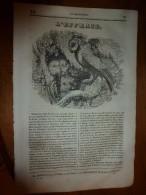 1835 LM : L'effraie; Les Calendriers Des Différents Peuples; Ségeste (près Palerme);ROBERT,fils De Hugues Capet;PLATINE - Vieux Papiers