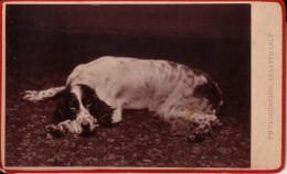 Chien Photo CDV Par GERUZET Frères Bruxelles Vers 1880 épagneul ? - Alte (vor 1900)