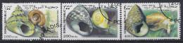 Somalia   1999 Mollusc (o) - Somalie (1960-...)