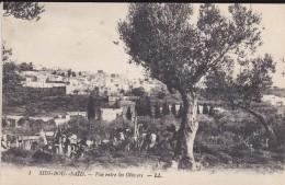 TUNISIE---SIDI-BOO-SAID--vue Entre Les Oliviers----voir 2 Scans - Tunisia