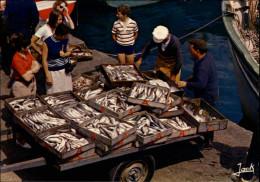 44 - LA TURBALLE - Retour De Pêche - La Turballe