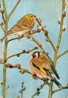 COPPIA DI  UCCELLINI          (NUOVA CON SCRITTA)  2 SCAN - Vögel