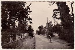 FRANCEVILLE (Calvados) .... L´ AVENUE DE ROUEN DANS LES PINS - Francia