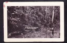 AUS1-36 IN THE AUSTRALIAN BUSH - Australia