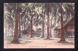 SP3-61 COCOANUT PLANTATION - Singapore