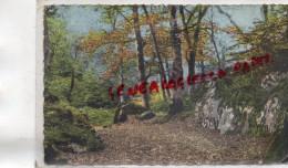 77 - FONTAINEBLEAU - FORET  LA GORGE AUX LOUPS  LOUP - Fontainebleau
