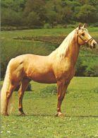 HORSES / PFERDE / CHEVAUX /    POSTCARD UNUSED     ( H  4365 ) - Pferde