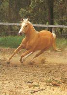 HORSES / PFERDE / CHEVAUX /    POSTCARD UNUSED     ( H  4370 ) - Pferde