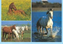 HORSES / PFERDE / CHEVAUX /    POSTCARD UNUSED     ( H  4382 ) - Pferde