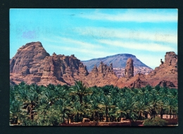 SAUDI ARABIA  -  Al-Ula  Palm Groves  Used Postcard As Scans - Saudi Arabia