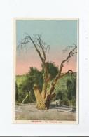 HEBRON 804 THE ABRAHAM OAK - Palästina