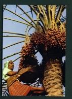 BAHRAIN  -  Harvesting The Date Palm  Unused Postcard - Bahrain
