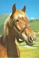 HORSES / PFERDE / CHEVAUX /    POSTCARD UNUSED     ( H  4449 ) - Pferde