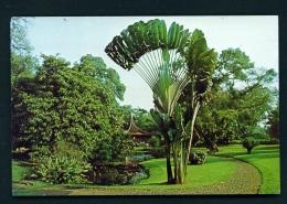 INDONESIA  -  Bogor  Unused Postcard - Indonesia