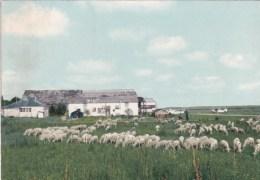 ROMILLY-sur-SEINE-AVIATION- L'AERODROME DU CAMP DE LA BELLE IDEE (2 Scans) - Romilly-sur-Seine