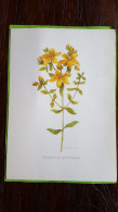 Willemien Min, 3 Prenten: Echinacea Purpurea, Hypericum Perforatum, Passiflora Incarnata - Aquarel