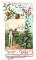 Chromo Chocolat Aiguebelle, Le Monde Des Plantes, Anone, Tabac - Aiguebelle