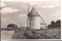 17   Ile D'oleron - Ile D'Oléron