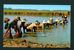 THAILAND  -  Farmers Catching Fish  Unused Postcard - Thailand