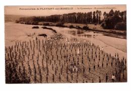 54 Flavigny Sur Moselle Preventorium La Gymnastique Mouvements D' Ensemble - Francia