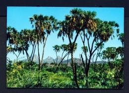 ETHIOPIA  -  Dum  Palm Trees  Unused Postcard - Ethiopia