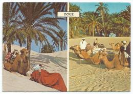 CP SOUVENIR DE DOUZ, CARAVANES, OASIS, TUNISIE - Tunisie