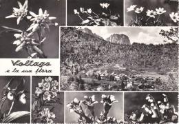 BELLUNO - Voltago Agordino E La Sua Flora - Panorama + 7 Vedute Floreali - 1963 - Belluno