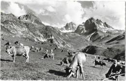 Elevage De Vaches, En été Dans Les Alpes - Tintement De Sonnailles Dans L'air Des Cimes - Carte Jansol Non Circulée - Veeteelt