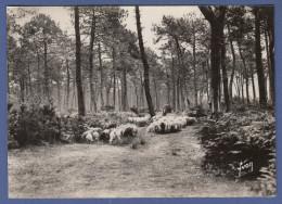 40 FORET LANDAISE Troupeau De Moutons - Animée - Non Classés