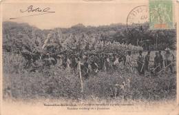¤¤   -   NOUVELLES-HEBRIDES  -   Canaques Travaillant Sur Une Plantation    -  ¤¤ - Vanuatu
