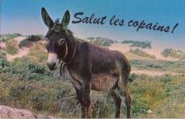 Âne   2H          Humour. Salut Les Copains! - Anes