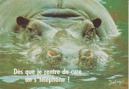 Hippopotame   H1H         Humour. Dès Que Je Rentre De Cure On S´téléphone ! - Hippopotames