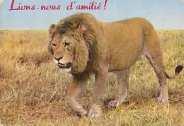 Lion   H1H         Humour.  Lions Nous D´amitié ! - Lions