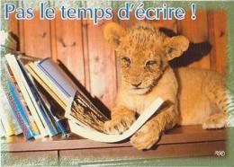 Lion   H2H         Humour.   Pas Le Temps D´écrire ! - Lions