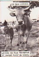 Vache   H11H          Humour.  Un Bon Conseil Laissez Ma Fille Tranquille Et Manger Plutot Du Cheval ( Buffier ) - Mucche