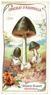 Chromo Chocolat Aiguebelle - Champignons - Volvaire Gluante ( Vénéneux ) - Aiguebelle