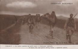 Vozarci - Guerre 1914-18 -expédition Balkanique  (chameaux Capturés) - Scan Recto-verso - Macédoine