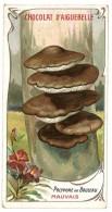 Chromo Chocolat Aiguebelle - Champignons - Polypore Du Bouleau - Aiguebelle