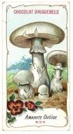 Chromo Chocolat Aiguebelle - Champignons - Amanite Ovoïde - Aiguebelle