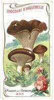 Chromo Chocolat Aiguebelle - Champignons - Pleurote De L'Eryngium - Aiguebelle